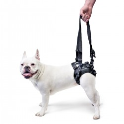 Dog Lift harness
