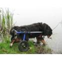 Sedia a rotelle cane