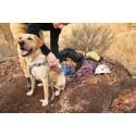 Double Back Harness para Arnés para perro discapacitado