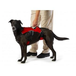 Maître vieux harnais pour chien