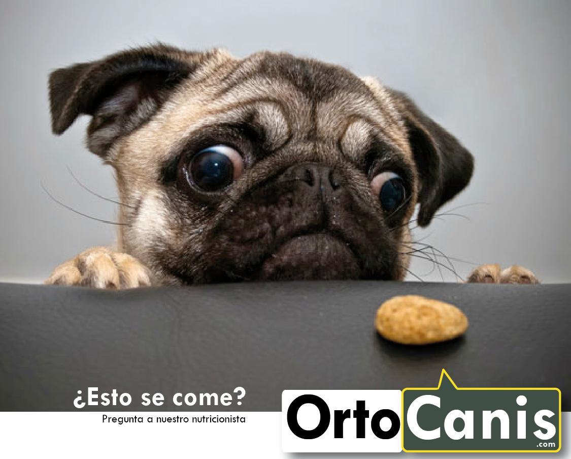 Nutrición Ortocanis
