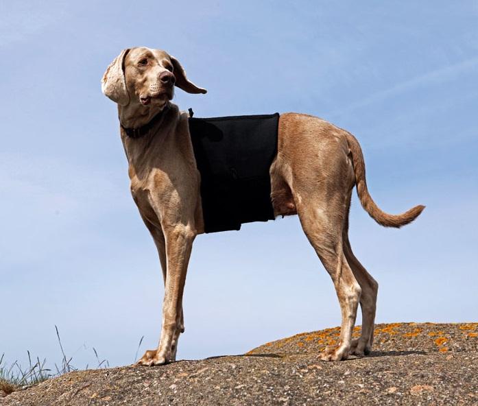 faja para el dolor de la espalda de perro