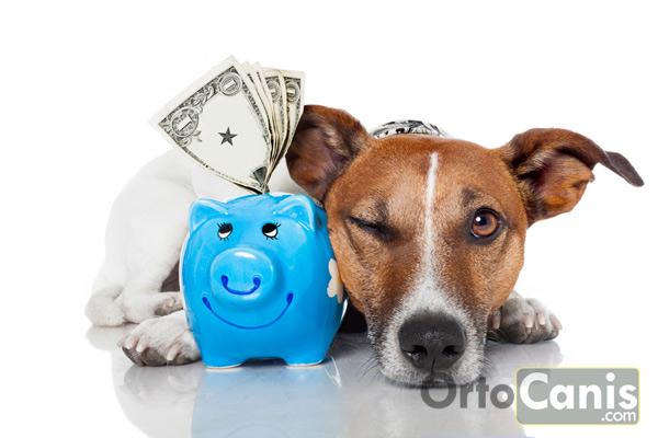 ahorra en gastos del perro