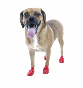 Botas para perro de caucho