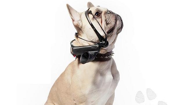 Lenguaje en perros