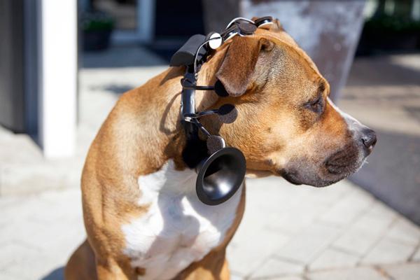 leedor-de-pensamientos-perro