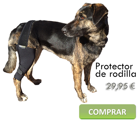 Protector de rodilla canina