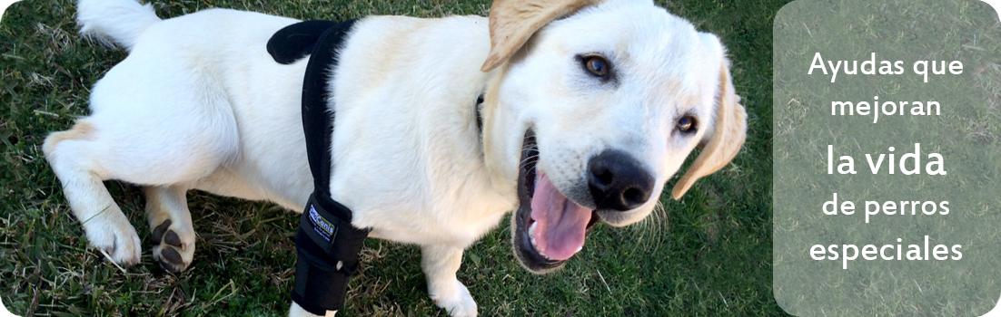 Ayudas ortopedicas para perros