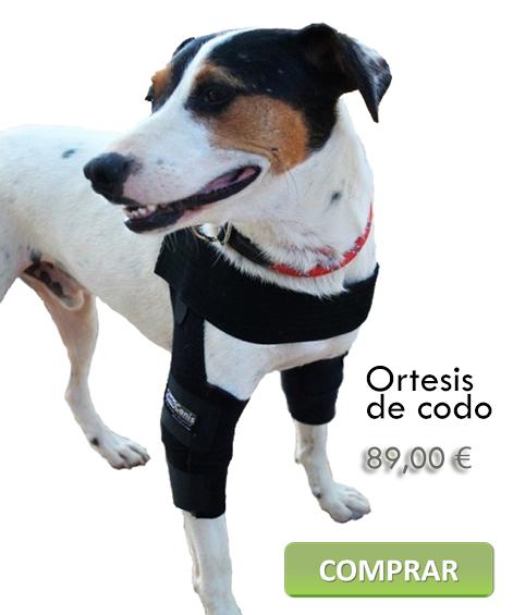 Ortesis de codo canina