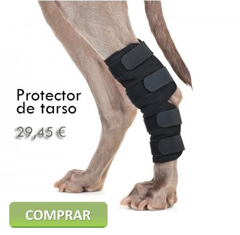 Protector de tarso