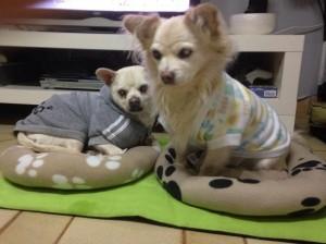 Perro-jumbo-y-hermano-ciegos
