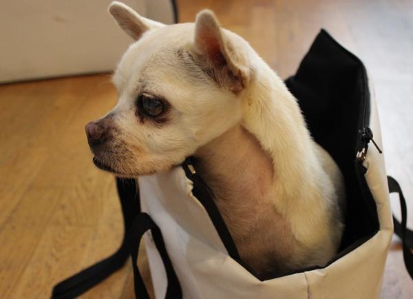 jumbo-perro ciego