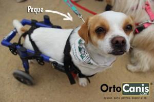 Perro con lesión de médula
