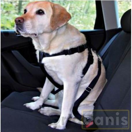 cinturon-de-seguridad-perro