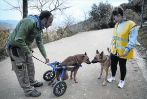 Perro atropellado y rescatado por perrera de barcelona