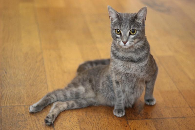 Pepa, la gata paralítica