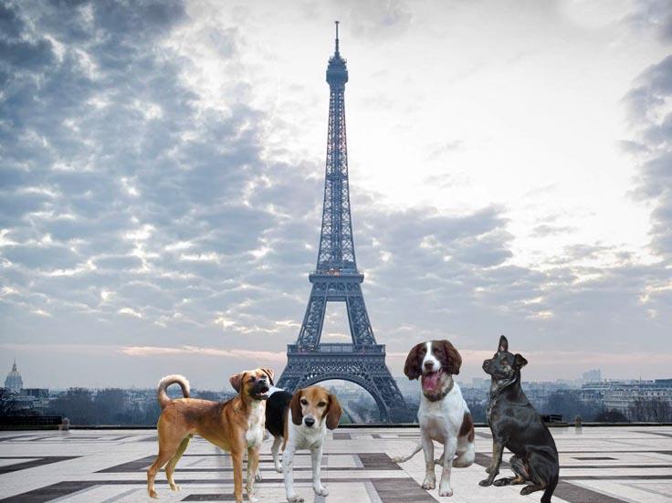 Perros Francia