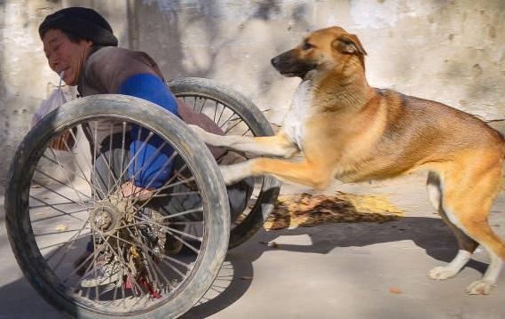 Perro empuja a su dueño en silla de ruedas.