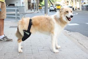 perro-rodilla-en-la-calle
