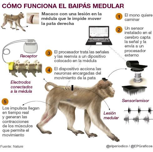 Recuperacion paralisis animal