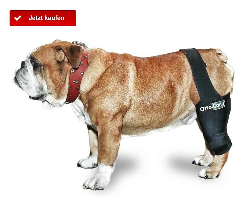 Knieschiene für Hund mit beschädigtem Kreuzband