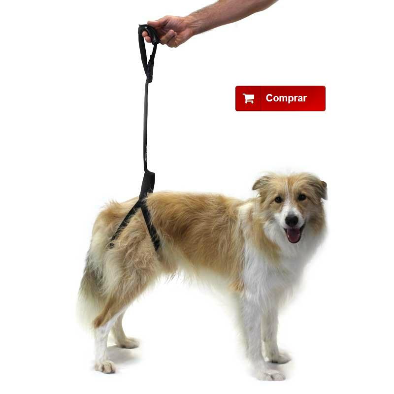 Arnés de soporte para perro con displasia de cadera
