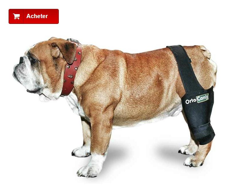 Joelheira cão com osteoartrite