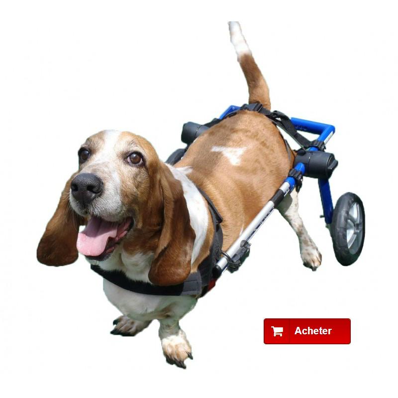 fauteuils roulants pour chiens