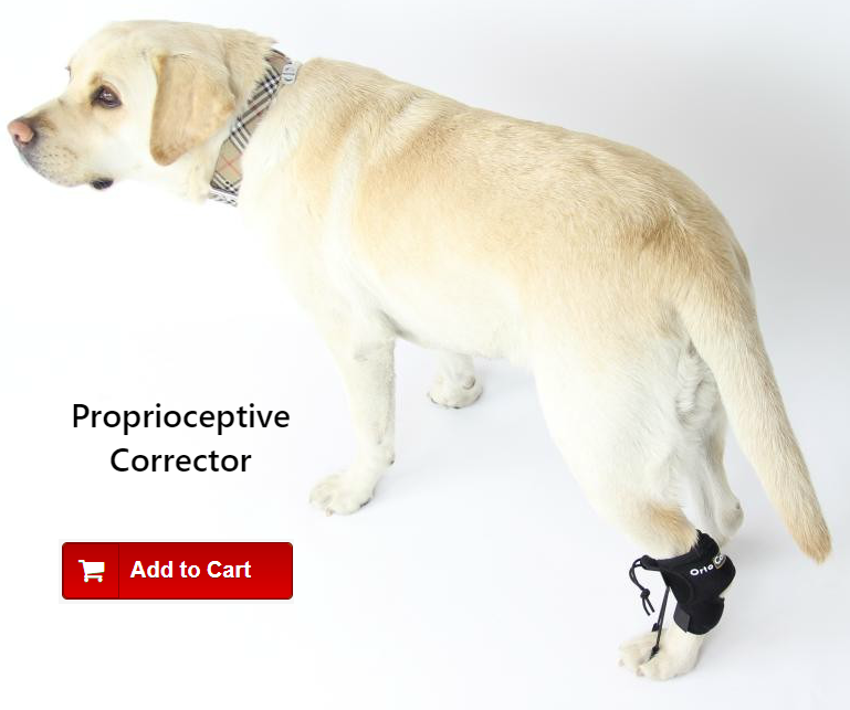 Proprioceptive Corrector for Limping