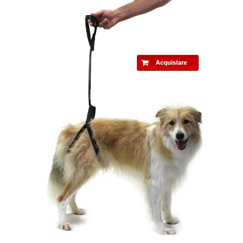 imbracatura di supporto per cane con displasia dell'anca