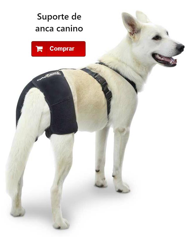 Suporte para cão com displasia da anca