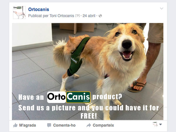 Ortocanis for free