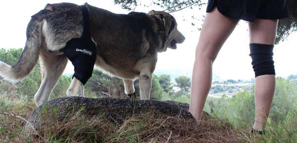 paseo perro en recuperación