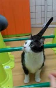 Problemas musculares en gatos