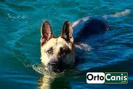 perro_agua.jpg