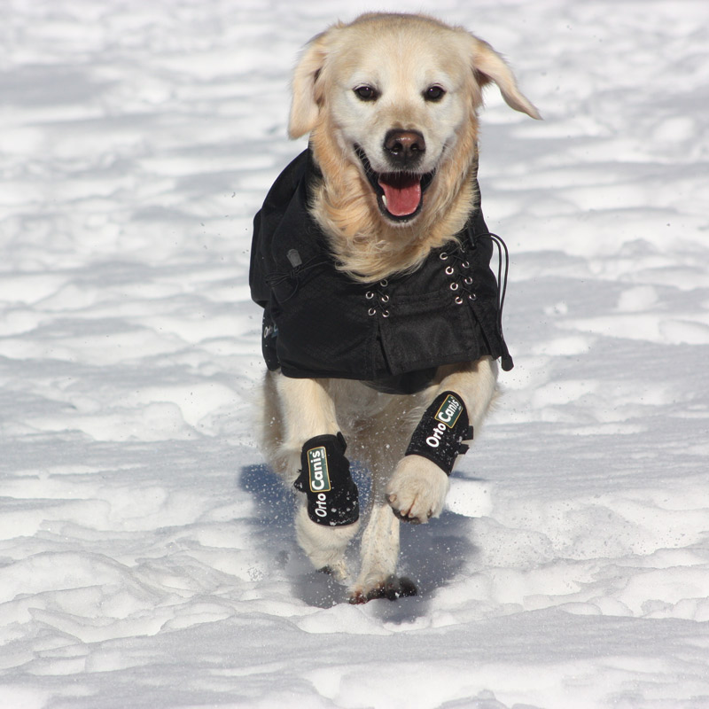 Photo: Back on Track thermal jacket protects from cold and moisture by reflecting the animal's own heat.