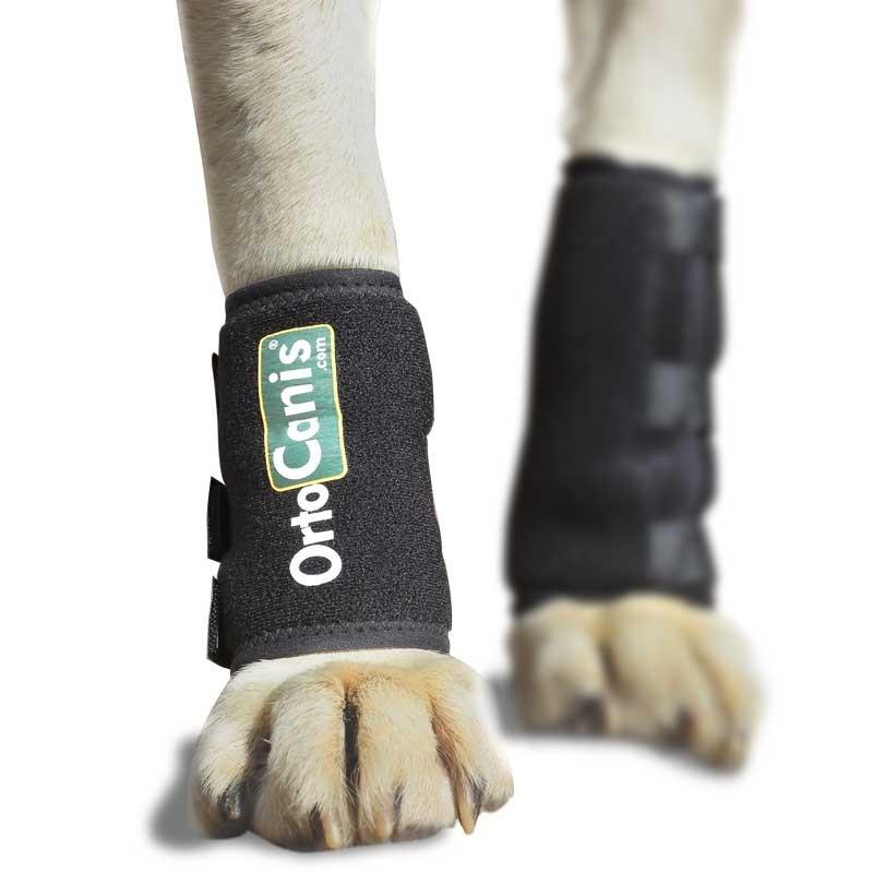 Ayuda para perro con artrosis en carpo