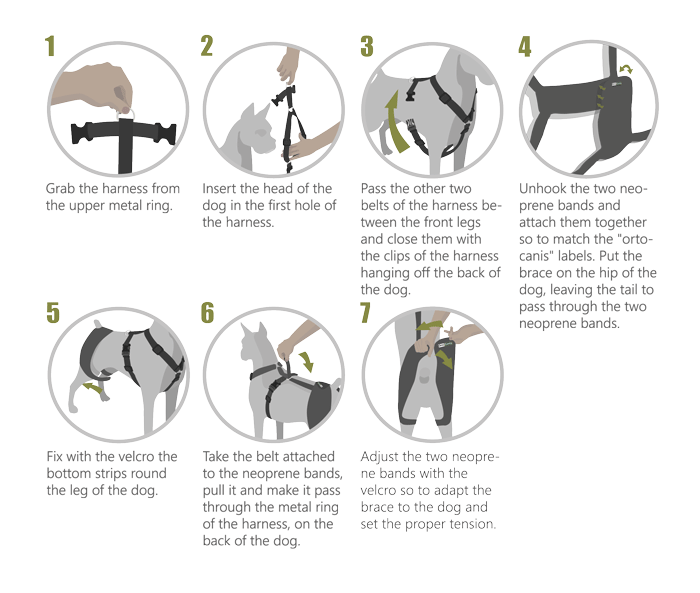Instructions hip and back brace
