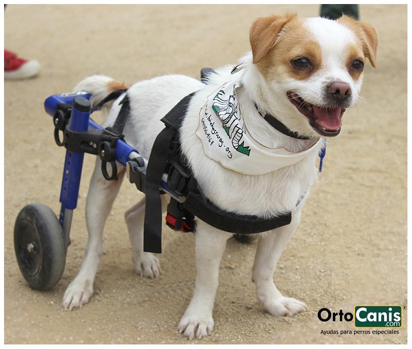 Silla de ruedas perro de segunda mano