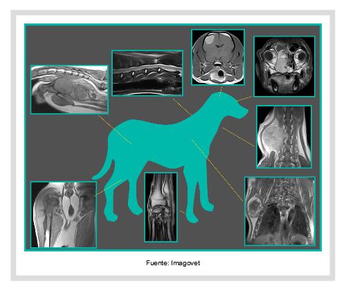 Resonancia magnética nuclear veterinaria