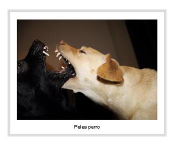 lotta tra cani