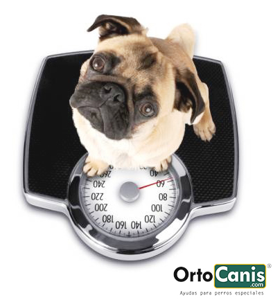 Obesity in dogs