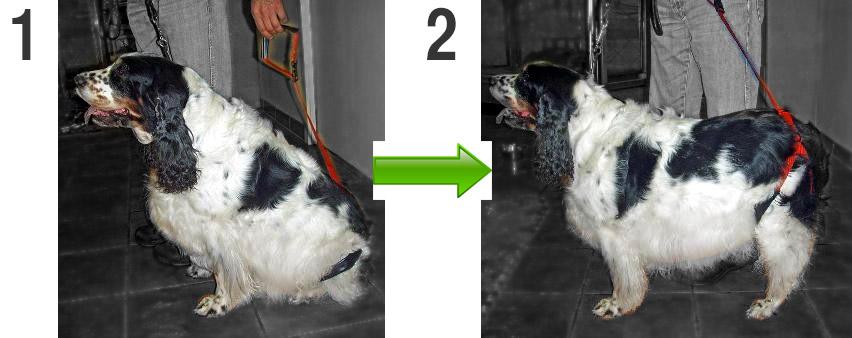 sentadilla perro