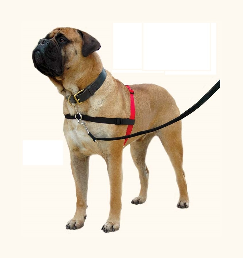 Educational harness for dogs with frontal loop