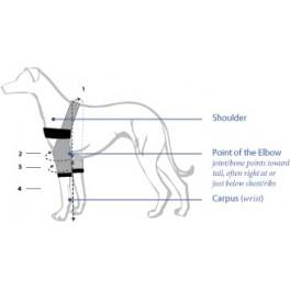 Elbow orthosis dog sizes