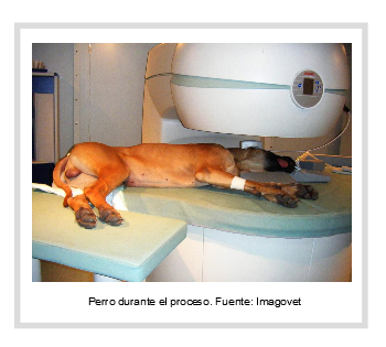 Resonancia magnética nuclear veterinaria