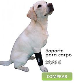 colocación soporte carpo para perro
