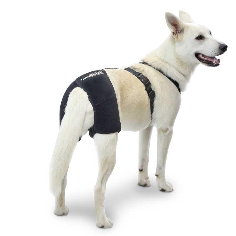Mon chien ne tient pas pattes arrière Qu'en est-il