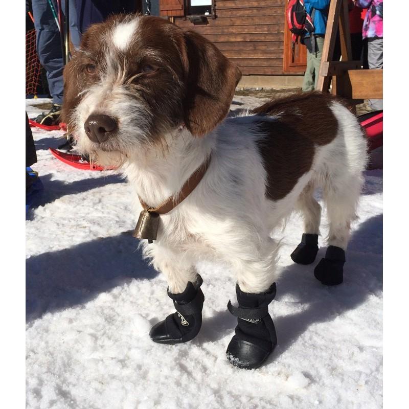 scarpe protettive per cane
