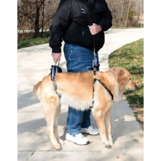 Harnais assisté pour chien